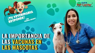 La importancia de las vacunas en las mascotas