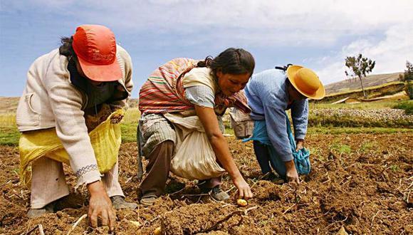Agrobanco. El acceso al crédito a los pequeños productores les brinda la posibilidad de mejorar sus cultivos, incrementar los niveles de producción y obtener mayores ingresos para elevar su calidad de vida.