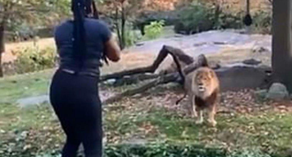 Mujer ingresó a fosa de leones en Nueva York pero tuvo suerte de salir ilesa. | Captura