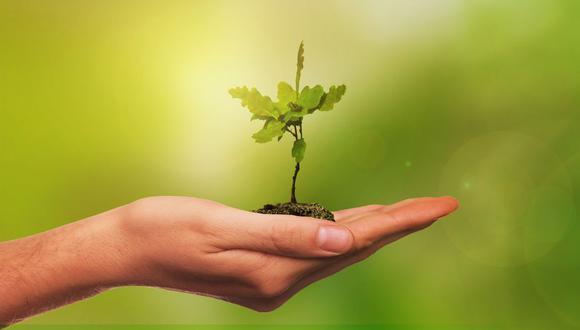 Inteligencia Artificial ayuda a decidir dónde es mejor plantar árboles para minimizar el impacto del carbono. (Foto: Pixabay)
