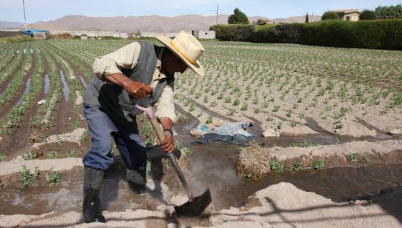 Principalmente en la agricultura. (USI)