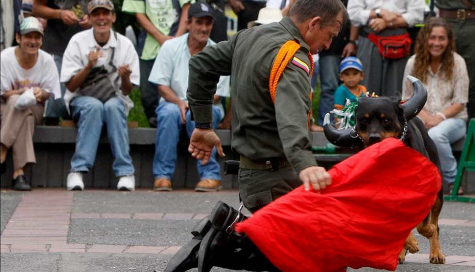 'Polux' es entrenado por Luis Usma, jefe de la Policía de Carabineros de Manizales, Colombia. (eltiempo.com)