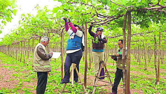La nueva Ley de Promoción Agraria tendrá nuevas disposiciones en materia laboral que deberán ser fiscalizadas por el Estado. (Foto: DIfusión)