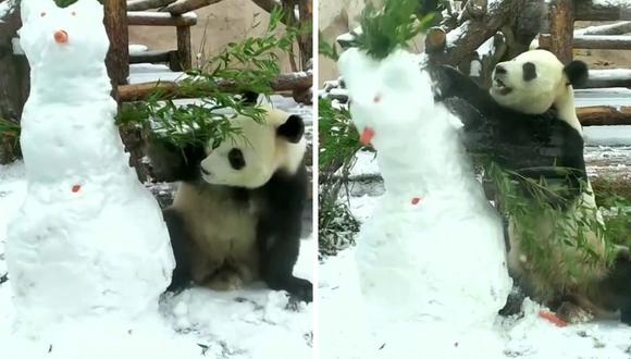 Ru Yi vive en el zoológico desde el año 2019. (Foto: Newzee   YouTube)