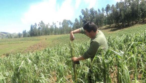 POLÉMICA AGRARIA. Ahora plantean nuevo gravamen para sector. (Andina)