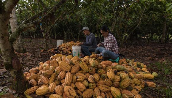 """El informe """"Huella hídrica del Perú: sector agropecuario"""" detalla que en las zonas donde se cultiva este producto se riega mayoritariamente con agua de las lluvias, por lo tanto, tiene un impacto positivo en el medio ambiente. (Foto: Juan Laura)"""