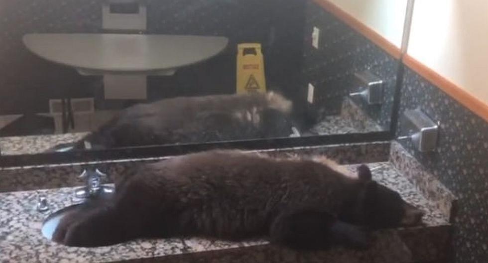 El osezno de color negro fue encontrado durmiendo sobre el lavamanos del baño de mujeres. (Foto: captura Facebook)