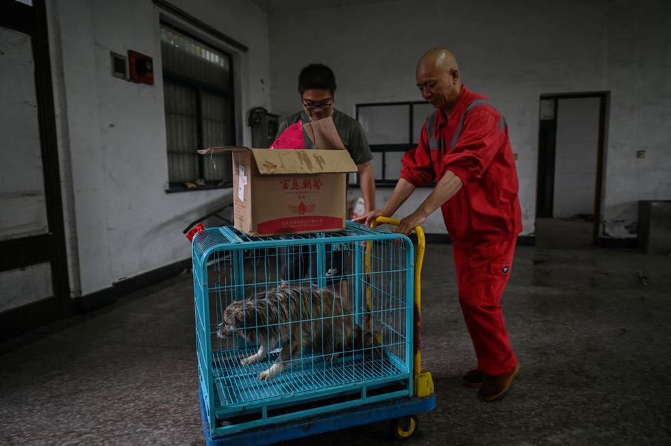 Zhi Xiang (derecha) transporta una jaula con un perro rescatado en un refugio en Shanghái.  (Hector RETAMAL / AFP).