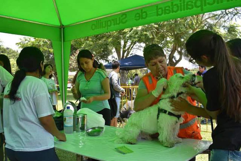 La Municipalidad de Surquillo reapertura este sábado 6 de julio la veterinaria municipal con una mega campaña gratuita para todas las mascotas. (Foto: Fundación Rayito)