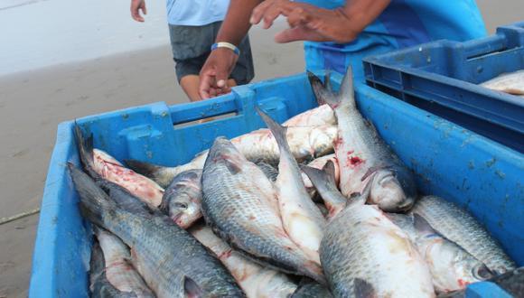 PBI: Sector pesquero está dinámico. (Fabiola Valle)