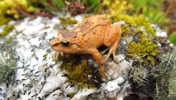 Investigadores tuvieron que instalarse por varias semanas en la selva. (Rudolf von May)