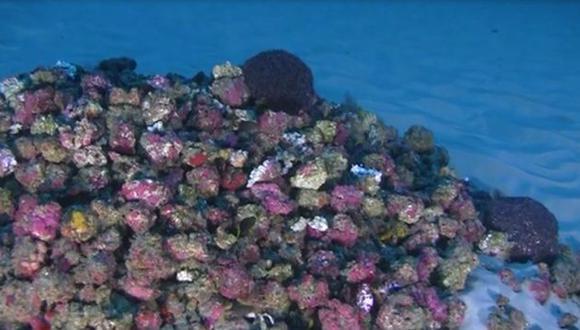 Primeras imágenes del arrecife de coral del Amazonas (Captura)