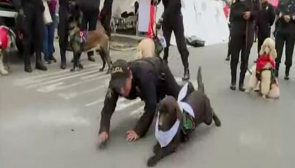 La Policía Canina se lució momentos antes de la Gran Parada Militar. (Foto: Captura/Latina)