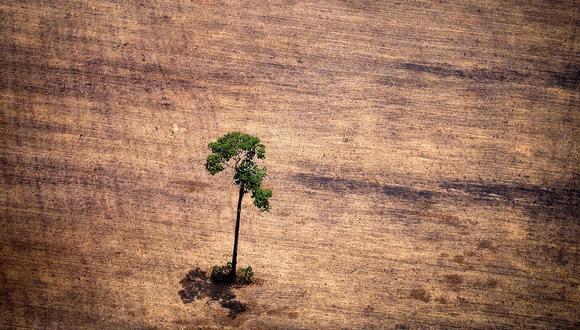 El incendio en la Amazonía provocaría graves consecuencias en el medioambiente. (Foto: AFP/archivo)