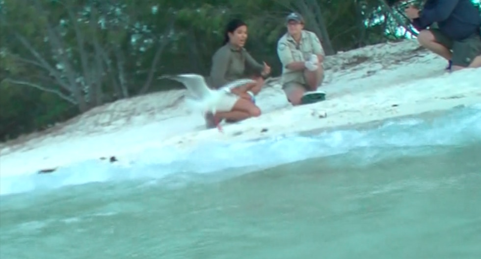 YouTube viral: Liberaba a tortugas en su hábitat natural cuando ocurrió inesperada escena | Australia | Video