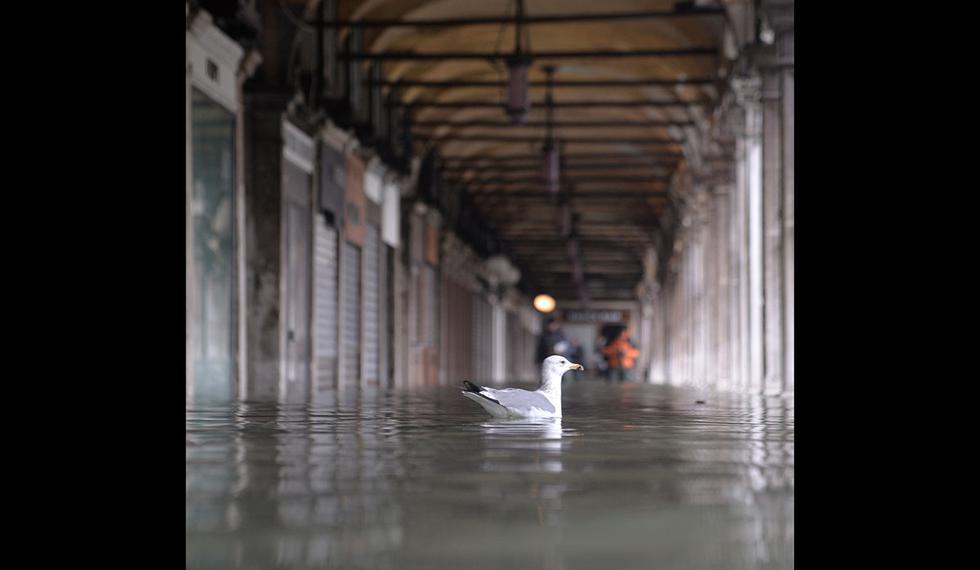 Las personas caminan cerca de una gaviota en la inundada Venecia. (Foto: AFP)