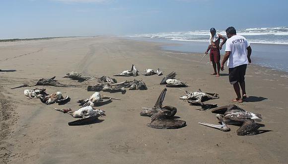 Miles de especies marinas han comenzado a aparecer muertas en Lima y en el interior del país. (Fabiola Valle)