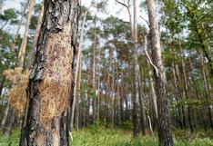 ¿Qué medidas se deben aplicar para que sector forestal promueva empleo y ayude a reducir pobreza en Amazonía?