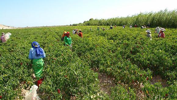 Agroexportación: Problemas de agua se acabarán en Ica. (USI/Referencial)