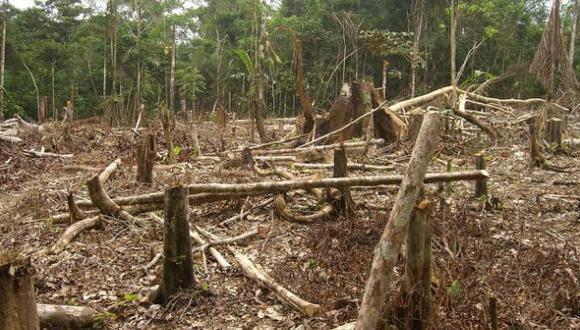 Minería ilegal acaba con bosques de América del Sur. (USI)