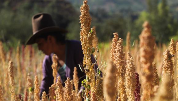 La quinua es el alimento súper nutritivo por excelencia. (Foto: GEC)