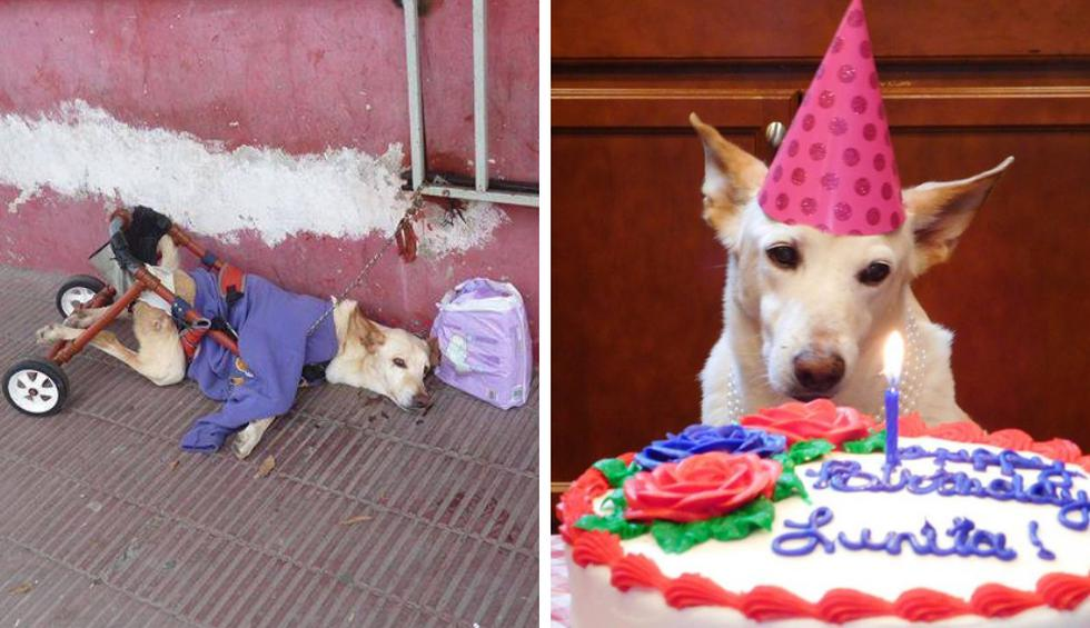 Lunita fue abandonada con su silla de ruedas rota y una bolsa de pañales en una estética canina en Argentina. Afortundamente, su historia tuvo un final feliz. (Fotos: Lunita's Wish en Facebook)