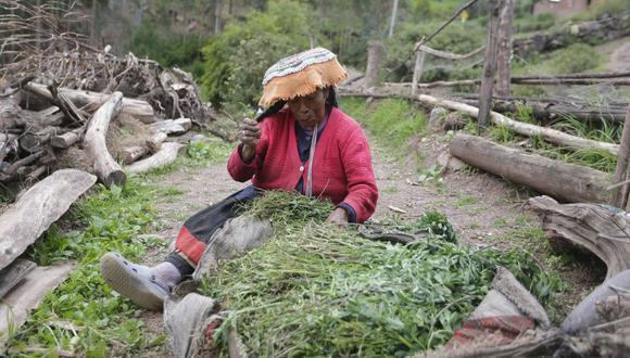 Hay una brecha entre el ingreso de los hombre y de las mujeres en el rubro de la agricultura. (Foto: Alonso Chero)
