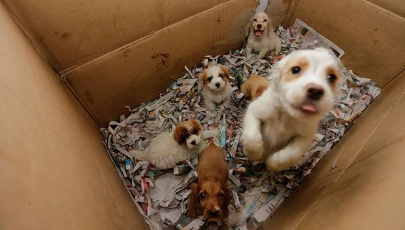 Las mascotas rescatadas serán esterilizadas de manera gratuita por veterinarias.