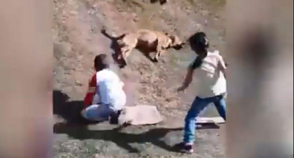 Este perrito de raza mestiza se robó el show en el juego de unos niños y quedó grabado en un video viral de Facebook. (Foto: captura).