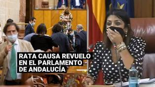 Rata irrumpió en sede del Parlamento de Andalucía y generó revuelo entre los diputados