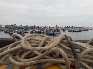 Construcción del puerto de Paracas amenaza la reserva