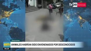Hallan en vía pública más de 20 perros muertos en Ayacucho