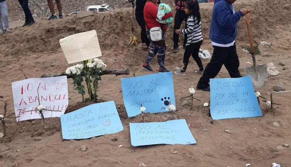 Villa El Salvador: Ofrecen recompensa por responsables de la matanza de perros y gatos. (Redes sociales)