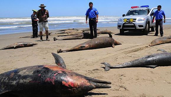 Más de 3,000 delfines han aparecido muertos en lo que va del año. (Perú21)
