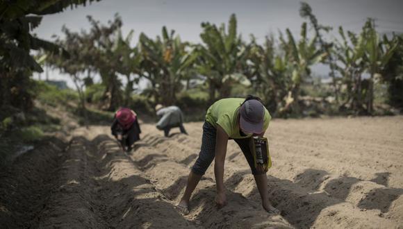 Unos 616 productores cambiarán sus cultivos actuales por otros más rentables con los recursos destinados. (Foto: Anthony Niño de Guzman / GEC)