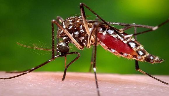 Aprenda a combatir al mosquito transmisor del mal. (FOTO: USI)