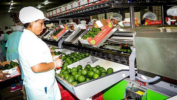 Las exportaciones de palta registraron un crecimiento de 71% según el Mincetur. (Foto: ADEX)