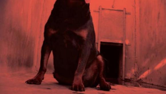 Maltrato animal en México. (Referencial)
