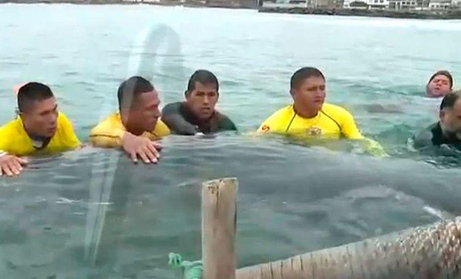Cetáceo quedó varado en la playa San Bartolo ubicada a la altura del kilómetro 51 de la carretera Panamericana Sur. (América Noticias)