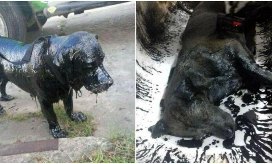 Cuatro días después de rescatarlo, el perro ya estaba fuera de peligro.