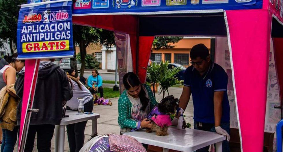 Esta campaña contará con la presencia de veterinarios experimentados que brindarán los servicios de desparasitación, aplicación antipulgas y consultas médicas. (Foto: Fundación Rayito)
