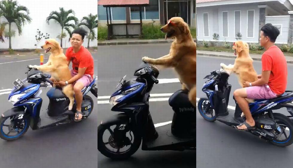Diversos usuarios quedaron impactados al ver al perro 'manejando' una moto lineal. (Facebook: @ViralesPopulares)