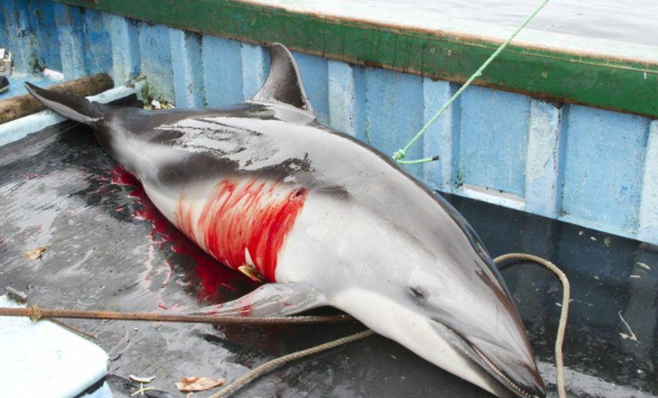 CAZA BRUTAL. El Gobierno anunció medidas para frenar la captura de especies protegidas. (Difusión)
