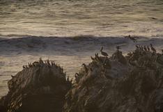 Illescas: Conoce el desierto en Piura que colinda con el mar en busca de protección