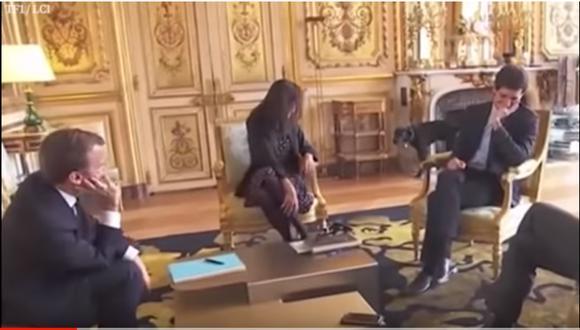 En el 2013, el chihuahua y los dos labradores del expresidente francés Nicolás Sarkozy destruyeron varios muebles históricos del Salón de Plata del Elíseo. (Captura de YouTube)