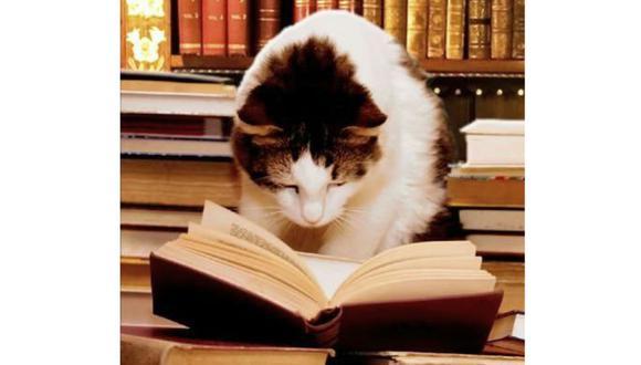 Día Internacional del Gato: 5 libros para celebrar su día . (Pinterest / Caturday)