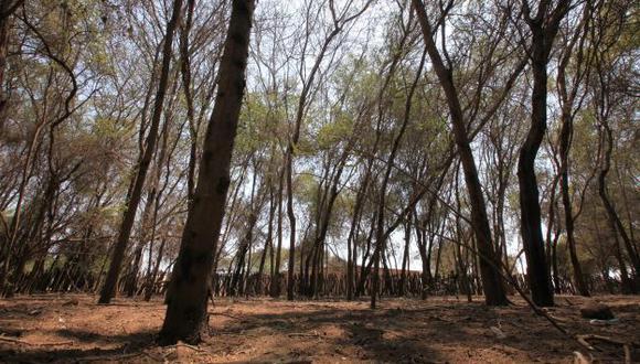 Busca adecuada gestión del patrimonio forestal y de fauna silvestre. (Perú21)