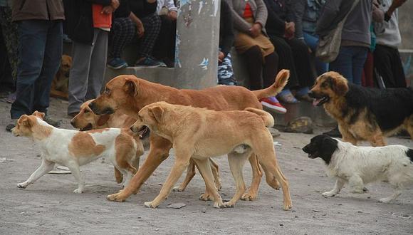 Proyecto del Congreso plantea que el Estado se encargue de la esterilización de las mascotas. (GEC)