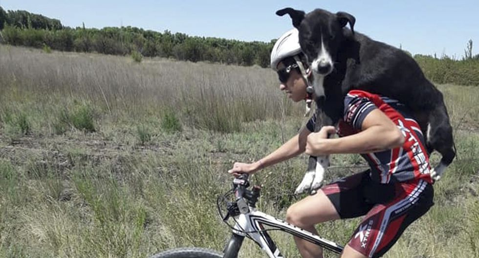 Ciclistas cargaron a un perro deshidratado que encontraron en medio de la carretera. Su objetivo era salvarlo. (Facebook | Marican Team)