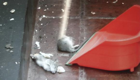 Lamentable panorama presentan las instalaciones que el Congreso destina a los agentes. (Imagen de TV/Frecuencia Latina)